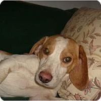 Adopt A Pet :: Chuckie - Eden, NC