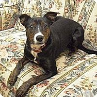 Adopt A Pet :: Adell - Wickenburg, AZ