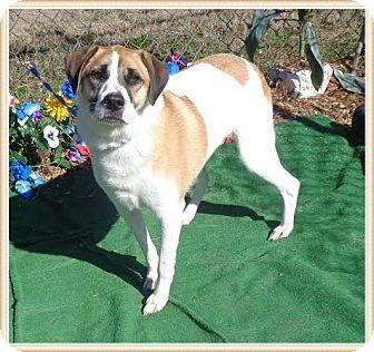 Labrador Retriever Mix Dog for adoption in Marietta, Georgia - CHLOE
