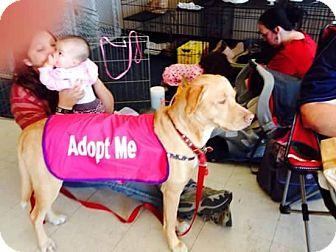 Labrador Retriever/Pit Bull Terrier Mix Dog for adoption in Enid, Oklahoma - Baby Girl