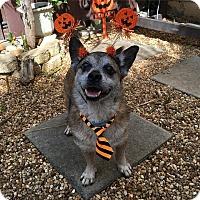 Adopt A Pet :: SuperDog - Davie, FL