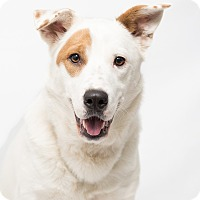 Adopt A Pet :: Lucy - Westfield, NY