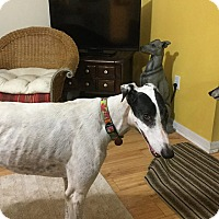 Adopt A Pet :: Schimitar - Canadensis, PA