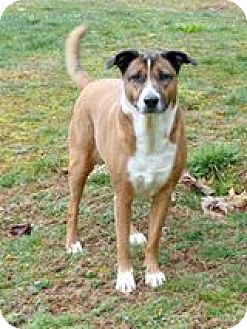 Mixed Breed (Medium) Mix Dog for adoption in Monterey, Virginia - Annie