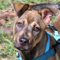 Adopt A Pet :: Arnold - Loxahatchee, FL