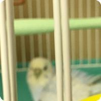 Adopt A Pet :: Sadie - Punta Gorda, FL