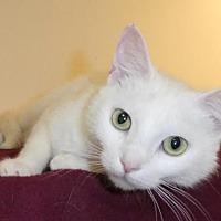 Adopt A Pet :: Bianca (FCID# 05/16/2017-101 Jenkintown PetSmart) - Greenville, DE