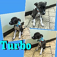Adopt A Pet :: Turbo - Hearne, TX