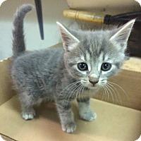 Adopt A Pet :: Torrence - East Brunswick, NJ