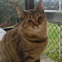 Adopt A Pet :: Mikita - Wellsville, NY