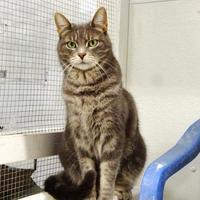Adopt A Pet :: Marsha - Belleville, MI