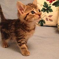 Adopt A Pet :: Ruby G - Orlando, FL