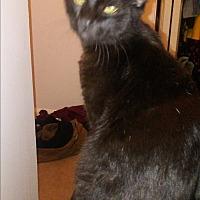 Adopt A Pet :: Norm - Parkton, NC