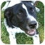 Photo 3 - Border Collie Mix Dog for adoption in Spring Valley, New York - Benji