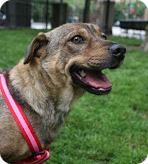 Hound (Unknown Type) Mix Dog for adoption in Jersey City, New Jersey - Blake Lively