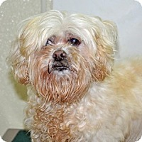 Adopt A Pet :: Juliet - Port Washington, NY