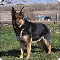 Adopt A Pet :: Kaiser - Fletcher - Hamilton, MT