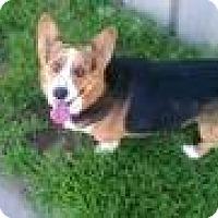 Adopt A Pet :: Montana - Inola, OK