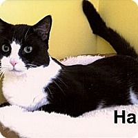 Adopt A Pet :: Halle - Medway, MA