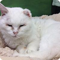 Adopt A Pet :: Xena - Byron Center, MI