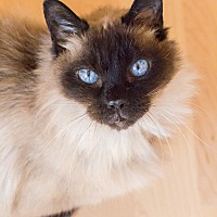 Adopt A Pet :: Marigold - Chicago, IL