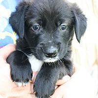 Adopt A Pet :: Madison - Foster, RI