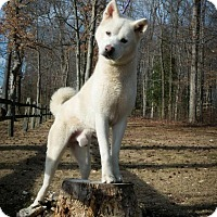 Adopt A Pet :: Sam - Toms River, NJ