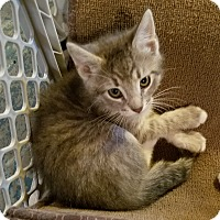 Adopt A Pet :: Nickleby - Geneseo, IL