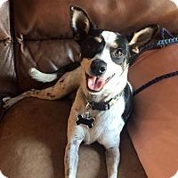 Adopt A Pet :: Baby Girl - Las Vegas, NV