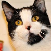 Adopt A Pet :: Crystal - Tilton, IL