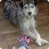 Adopt A Pet :: Buddy - Corona, CA