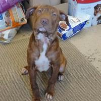 Adopt A Pet :: Betty - Eagle River, WI