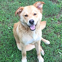 Adopt A Pet :: Teddy URGENT - Harrisonburg, VA