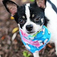 Adopt A Pet :: Lil' Man - Griffin, GA