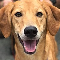 Adopt A Pet :: Murph - Cincinnati, OH