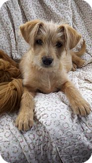 Terrier (Unknown Type, Small) Mix Dog for adoption in Kalamazoo, Michigan - Tito