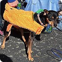 Adopt A Pet :: Marti - Westfield, IN