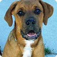 Adopt A Pet :: Frik - Cheyenne, WY