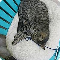 Adopt A Pet :: Tigger - Mobile, AL