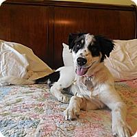 Adopt A Pet :: Birdie - San Antonio, TX
