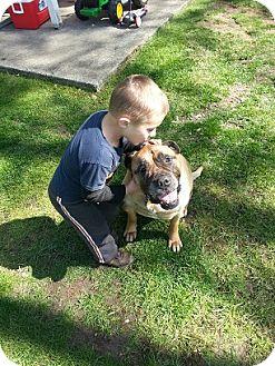 Bullmastiff Dog for adoption in Roy, Washington - Annie