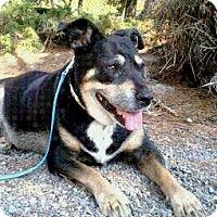 Adopt A Pet :: Sage - Petaluma, CA