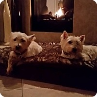 Adopt A Pet :: COCO AND CAMERON-ADOPTED - Frisco, TX