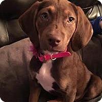 Adopt A Pet :: Reese - Marlton, NJ