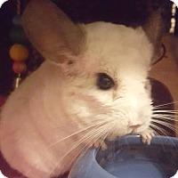 Adopt A Pet :: Sydney - Patchogue, NY