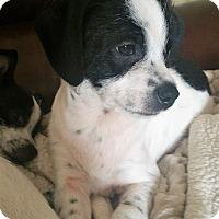 Adopt A Pet :: Moose-ADOPTED - Sacramento, CA