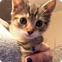 Adopt A Pet :: Apache - River Edge, NJ