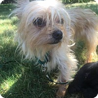 Adopt A Pet :: Hr - Mario (Bonded Pair) - Livonia, MI