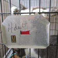 Adopt A Pet :: 34166956 - West Monroe, LA