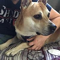 Adopt A Pet :: Brooklyn - Overland Park, KS